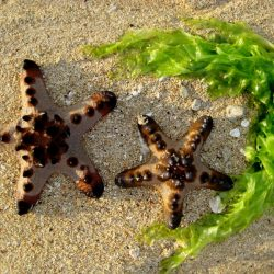 starfish hanging out 1